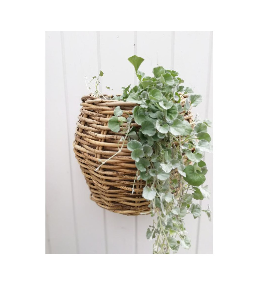 Plantekurv til væg med plastfor H: 28 cm. - 1
