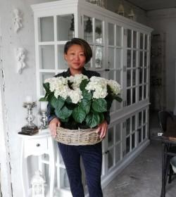 Kunstig lysegrøn hortensia plante H: 43 cm. pr. stk. - 1