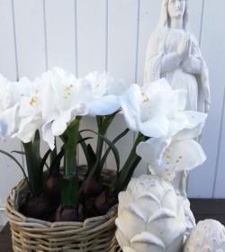 Kunstig hvid amaryllis i potte H: 45 cm. pr. stk. - 1