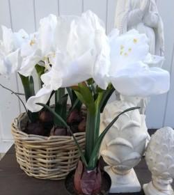 Kunstig hvid amaryllis i potte H: 45 cm. pr. stk. - 2