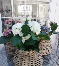 Kunstig hvid hortensia...