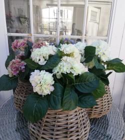 Kunstig lysegrøn hortensia...