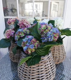Kunstig blå/grøn hortensia...