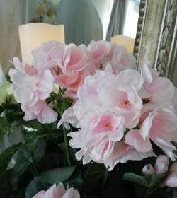 Kunstig rosa pelargonie H:...