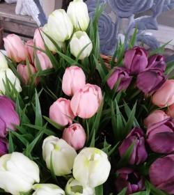 Kunstige hvide tulipaner i potte H: 23 cm.   - 3