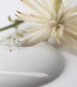 Kalkmaling Antique cream 2,5 l. - 2