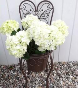 Brun sommerfuglestol til planter H: 59 cm.  - 1