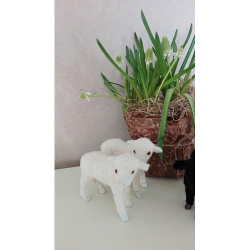 Lille får (Hvidt stående hvide klove)